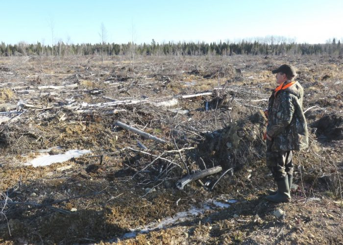 Roger Babin, a long-time forest defender from Acadieville, standing in a recent clearcut near his home. Photo by Dallas McQuarrie.